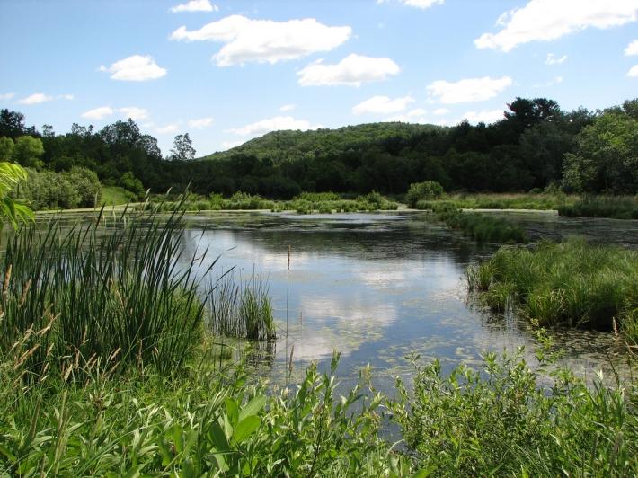 pond_in_kwr