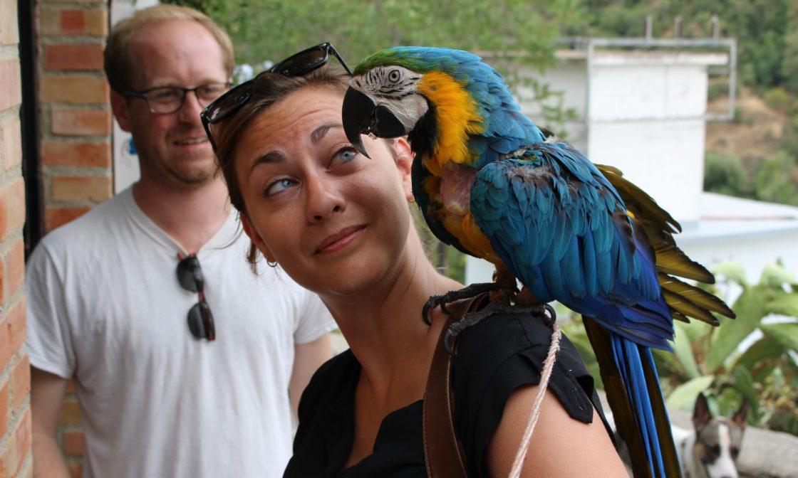 cropped-granada-parrot2.jpg